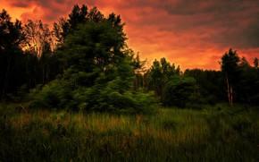 Обои лес, закат, вечер, digital painting