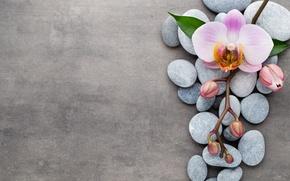 Картинка камни, орхидея, pink, flowers, orchid
