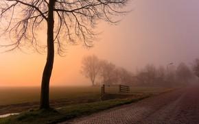 Обои дорога, туман, дерево, утро
