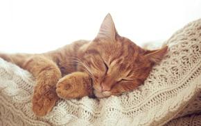 Картинка кошка, кот, лапы, рыжий, мордочка, спит, отдыхает