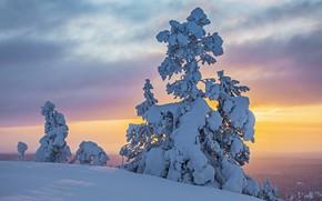 Картинка дерево, снег, зима