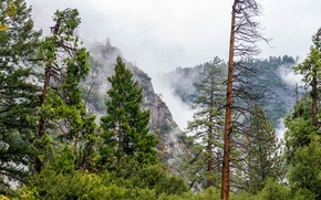 Картинка лес, деревья, горы, туман, скалы, США, Йосемити