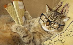 Картинка кот, креатив, юмор, очки, лежит, подушка, журнал, читает, умный