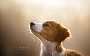 Картинка взгляд, свет, собака