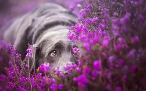 Картинка взгляд, цветы, собака