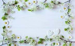 Картинка цветы, ветки, фон, ромашки