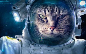 Обои space suit, cat, fantasy