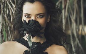 Картинка чёрная роза, Beatriz Calderón, эмблема печали