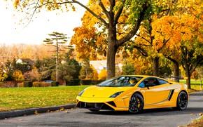 Картинка осень, Lamborghini, суперкар, Gallardo, желтая, ламборгини, галлардо