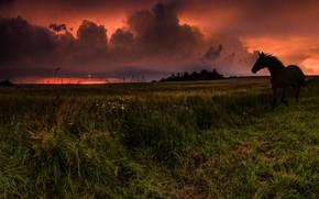 Обои непогода, лошадь, трава, небо, поле, гроза, зарево, тучи, молнии