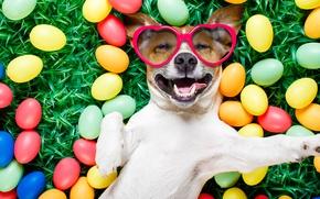 Картинка трава, собака, colorful, очки, Пасха, сердечки, happy, dog, spring, Easter, eggs, holiday, funny, яйца крашеные