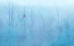 Картинка природа, лист, туман