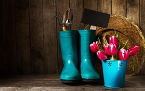 Картинка Цветы, Тюльпаны, Букет, Самоги