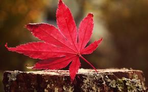 Картинка осень, лист, багрянец