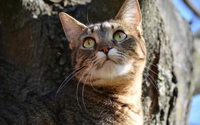 Обои Дерево, Кошка, Cat, Tree
