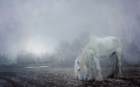 Картинка утро, зима, иней, мохнатый, домик, поле, белая, конь, свет, снег, туман, белый, деревья, лошадь в …