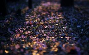 Картинка свет, цветы, весна, утро