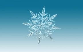 Обои симметрия, узор, снежинка, лед, зима