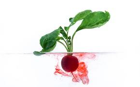 Картинка листья, вода, ботва, свекла, корнеплод