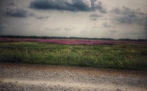 Картинка поле, цветы, красота, цветы полевые