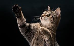 Картинка кошка, глаза, усы, лапы
