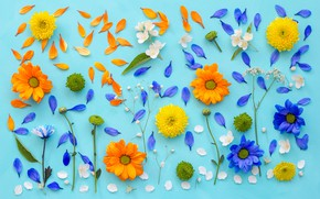 Обои хризантемы, фон, лепестки, цветы