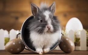 Картинка праздник, яйца, кролик, ведерко