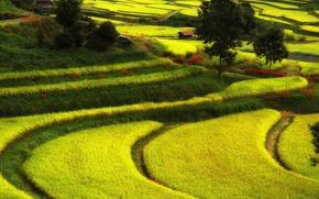 Картинка природа, поля, Япония, домик, Асука