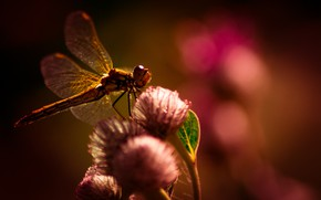 Картинка summer, flower, nature, beautiful, fly, dragonfly, searching, plants, insect, outdoor, exploration