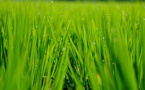 Картинка зелень, трава, фон