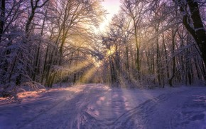 Обои деревья, фото, Aleksei Malygin, зима, снег, лучи, солнце