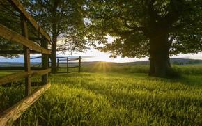 Картинка дерево, утро, луг