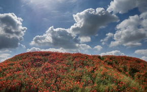 Картинка лето, небо, трава, солнце, облака, цветы, маки, холм, красные