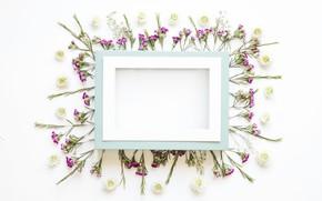 Картинка цветы, рамка, лепестки, flowers, декор, decoration, frame