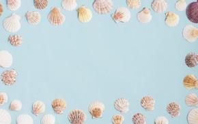 Картинка лето, фон, ракушки, summer, beach, marine, frame, composition, seashells