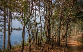 Картинка Природа, Деревья, Лес