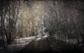 Картинка дорога, лес, весна