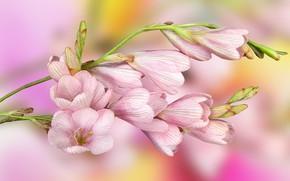 Обои Kwiaty, Liście, różowe