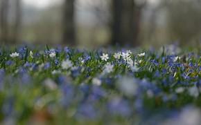 Картинка цветы, поляна, Весна