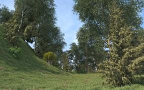 Картинка природа, растительность, склон, холм, a new time