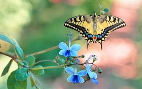 Картинка бабочка, цветки, нимфалида