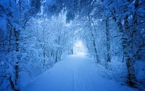 Картинка зима, дорога, снег, деревья, Норвегия