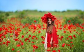 Обои природа, поле, девочка, маки, цветы