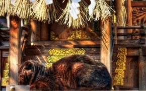 Картинка кот, Япония, храм, дремлет