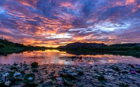 Картинка небо, облака, закат, озеро, вечер, лотос
