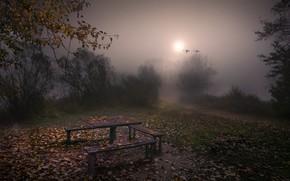 Обои туман, вечер, скамья, осень