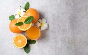 Обои Апельсин, цитрус, сок, плюмерия
