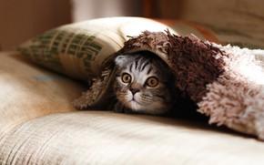 Картинка удивление, подушка, котёнок