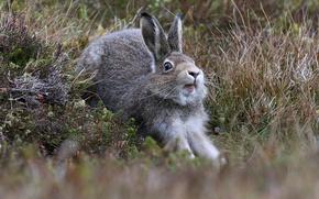 Картинка трава, заяц, потягушки