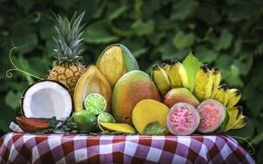 Обои кокос, лайм, фрукты, манго, ананас, банан, тропические, фейхоа